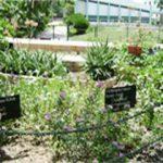 Pharmaceuticals Garden
